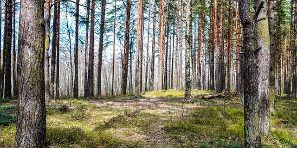 Bosques cerca de Madrid